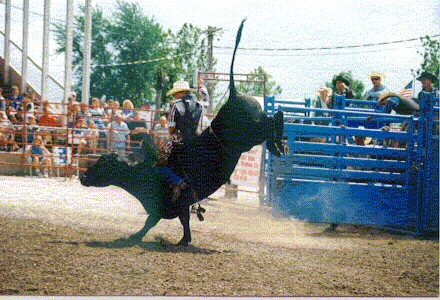 Bull Riding New Windsor Rodeo